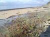 saule-sur-la-plage